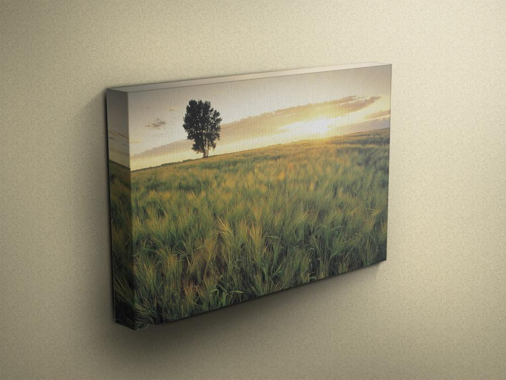 "Sunset Barley Field - Fine Art Photograph on Gallery Wrapped Canvas - 16x12"" & more"