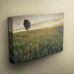 """Sunset Barley Field - Fine Art Photograph on Gallery Wrapped Canvas - 16x12"""" & more"""